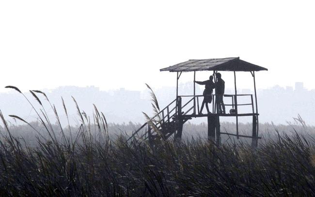 okhla bird sanctuary noida couple